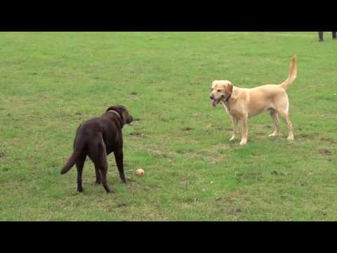 Puppy Dog Hotel Holiday Sophie Miller Coco Poppy and Jack