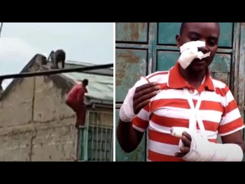 Man Falls From Building Escaping From Stray Baboon