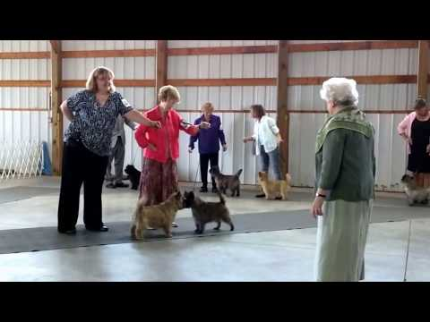 Best of breed 6/24/17 by Judge Lydia Coleman Hutchinson