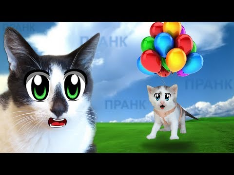 5 СМЕШНЫХ ПРАНКОВ над КОТАМИ! Новые приколы с котами от А ну-ка Давай-ка