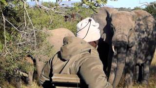 Elephant Blockade .MOV