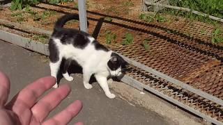 кошки во дворе: не говори кис-киз всуэ