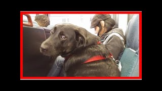 Seattle Dog Rides The Bus To The Dog Park All By Herself| Dog Rescue Stories