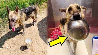 Изможденная собака с надеждой смотрела на людей грустными глазами