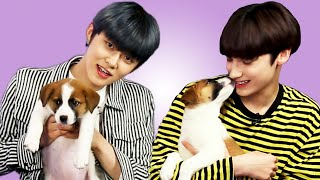 TXT Plays With Puppies While Answering Fan Questions