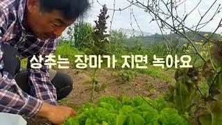 주말농장 잡초전쟁 (3)