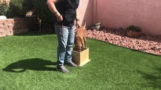 NePoPo® Training the heel
