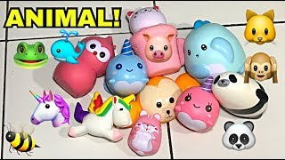 SQUISHY HIDUP?!! Animal Squishy Collection // QnA Time #1