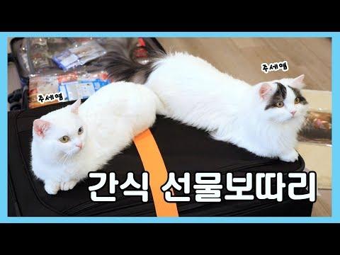 엄마가 사 온 선물보따리: 반년치 고양이 간식
