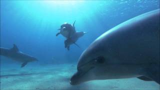 Ambient Music Ocean Dolphins