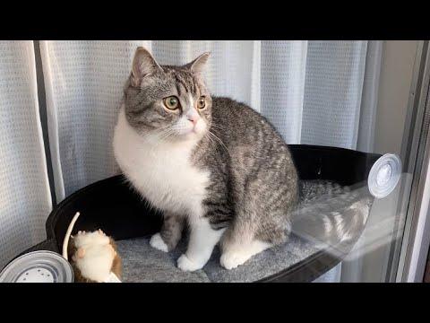 窓際で寛いでたらカラスと目が合って動けなくなっちゃった猫がこちら…