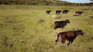 Mavic pro drone failure in crop circle