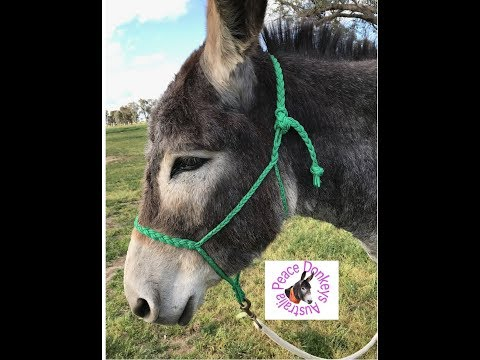 How To Make A Braided Horse Halter With Paracord (muletape Style)