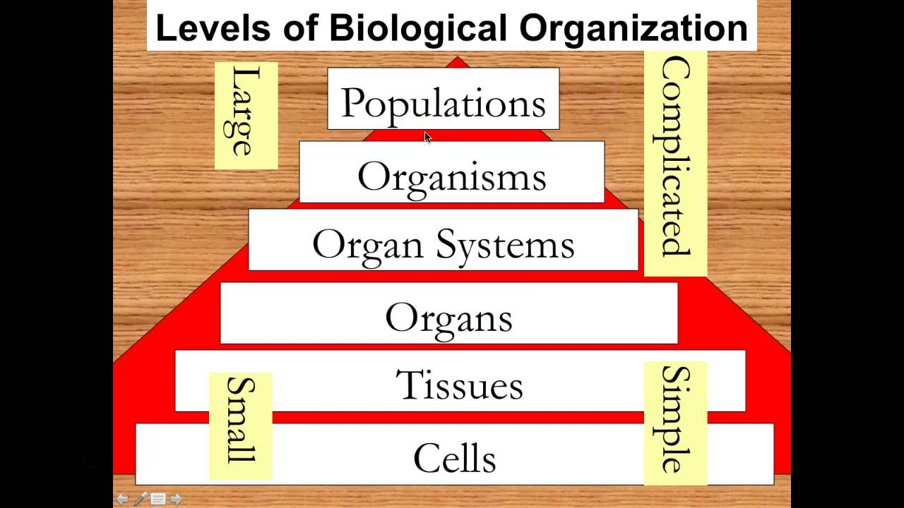 LEVEL OF BIOLOGICAL ORGANIZATION EPUB DOWNLOAD