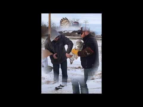 Healing Haven Wildlife Rescue Volunteers - Video by Sherri Friedrich