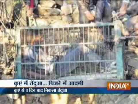 Rajasthan wildlife officials trying to rescue trapped leopard from well since last 3 days
