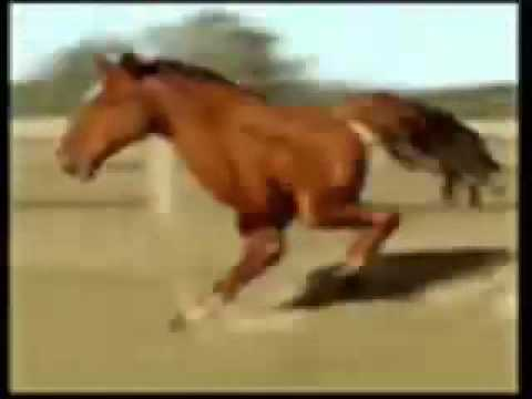 Retarded Running Horse With 2 legs!(FUNNY SONG)