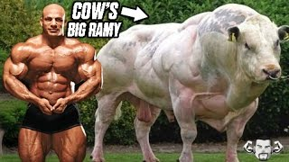 Steroid cow how long do the benefits of steroids last