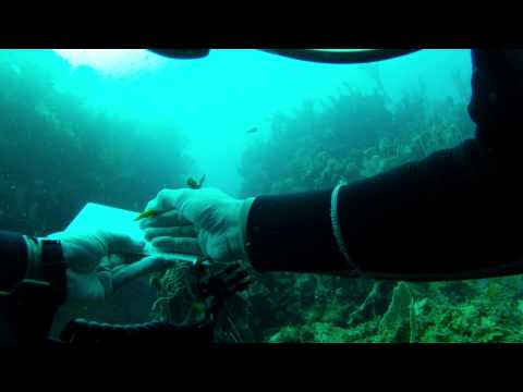 Site Mapping Video - Black Coral Wall, Utila Dive Center, Honduras