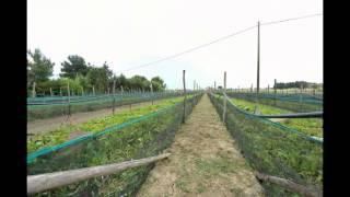 Aito Helix Snail Farms (Italy)