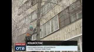 МЧС для кошек появилось в Екатеринбурге