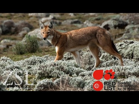 ZSL and the IUCN Red List