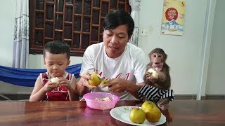 Baby Monkey   Invite Everyone To Eat Asian Pears With Doo Family