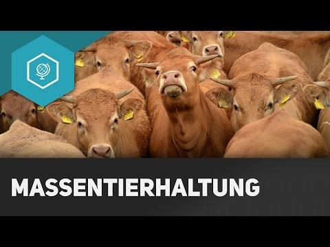 Massentierhaltung: Vorteile, Nachteile Und Folgen - Landwirtschaft In Industrieländern 6