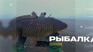 РЫБА ВАЛИТ РЕКОЙ Снасти Подход рыбы ЛЕЩ СОМ САЗАН