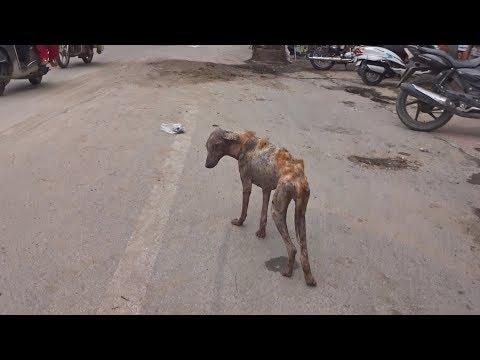 Moving skeleton dog transforms after rescue