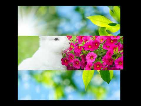 Tu nahi to In labe pe sad song 2017 (prince Ram suchith#)