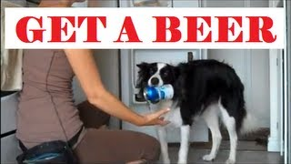Dog Getting A Beer- Teach Your Dog How In 5 Steps. Amazing Trick!