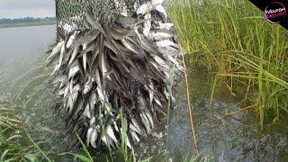 Perangkap Paling Nekat! 7 Teknik Menangkap Ikan Paling Cerdas Dan Kreatif
