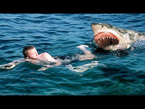 Top 15 Scary Animals You Need To STAY AWAY From