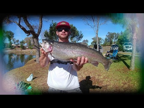 Shocking Giant Trout Catch At Santee Lakes (new Pb)