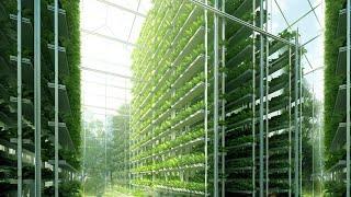 🌱 الزراعة بدون تربة (الزراعة الهوائية) : اكبر مزرعة عمودية في العالم جزء رقم 1 🌱