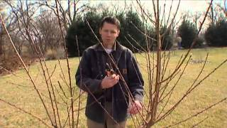 Pruning Peaches