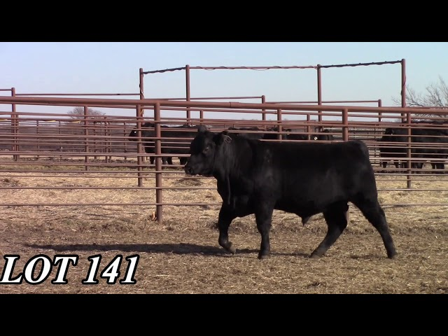 Mead Angus Farms Lot 141