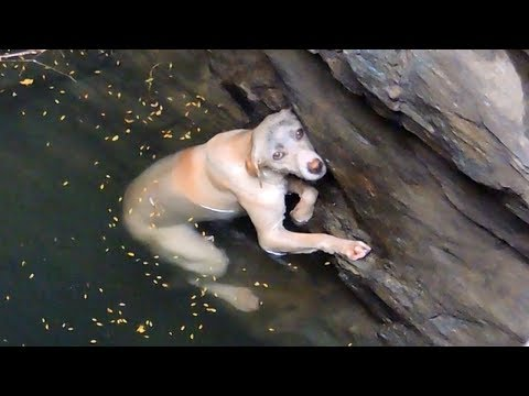 A drowning dog's desperate wish comes true
