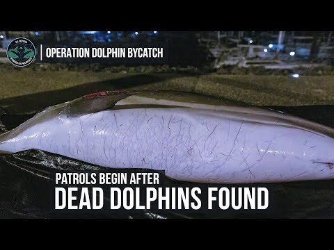 Dead Dolphins on the French Coast: Sea Shepherd France Begins Patrols