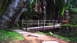 Panning Shot Of Trail And Wooden Bridge In Rio.