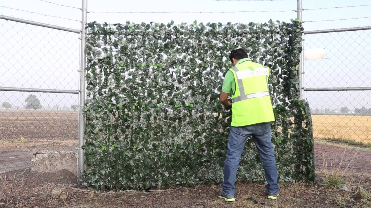 Beevergreen follaje artificial en rollo youtube for Follaje para jardin