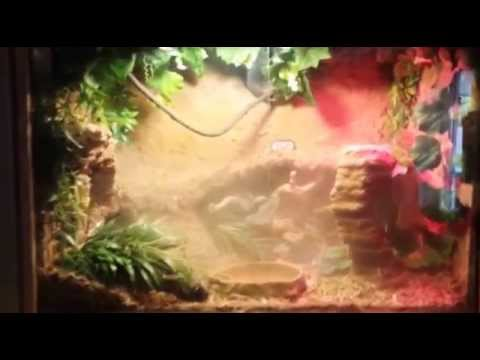 Fog Your Reptile Terrarium Or Cage Youtube