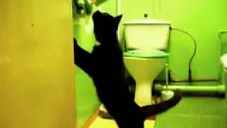 кошка орет