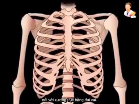 Hệ xương: cấu tạo và chức năng của xương