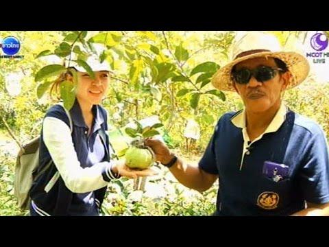 เกษตรทำเงิน : ศูนย์เรียนรู้เศรษฐกิจพอเพียงบางกล่ำ จ.สงขลา   สำนักข่าวไทย อสมท
