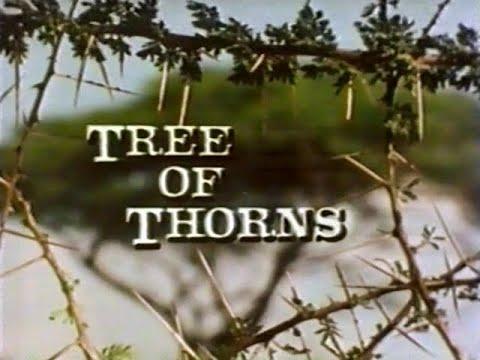 Acacia: Tree of Thorns [1983]