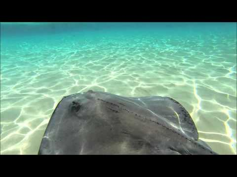 Stingray City Tours in Grand Cayman with Moby Dick Tours