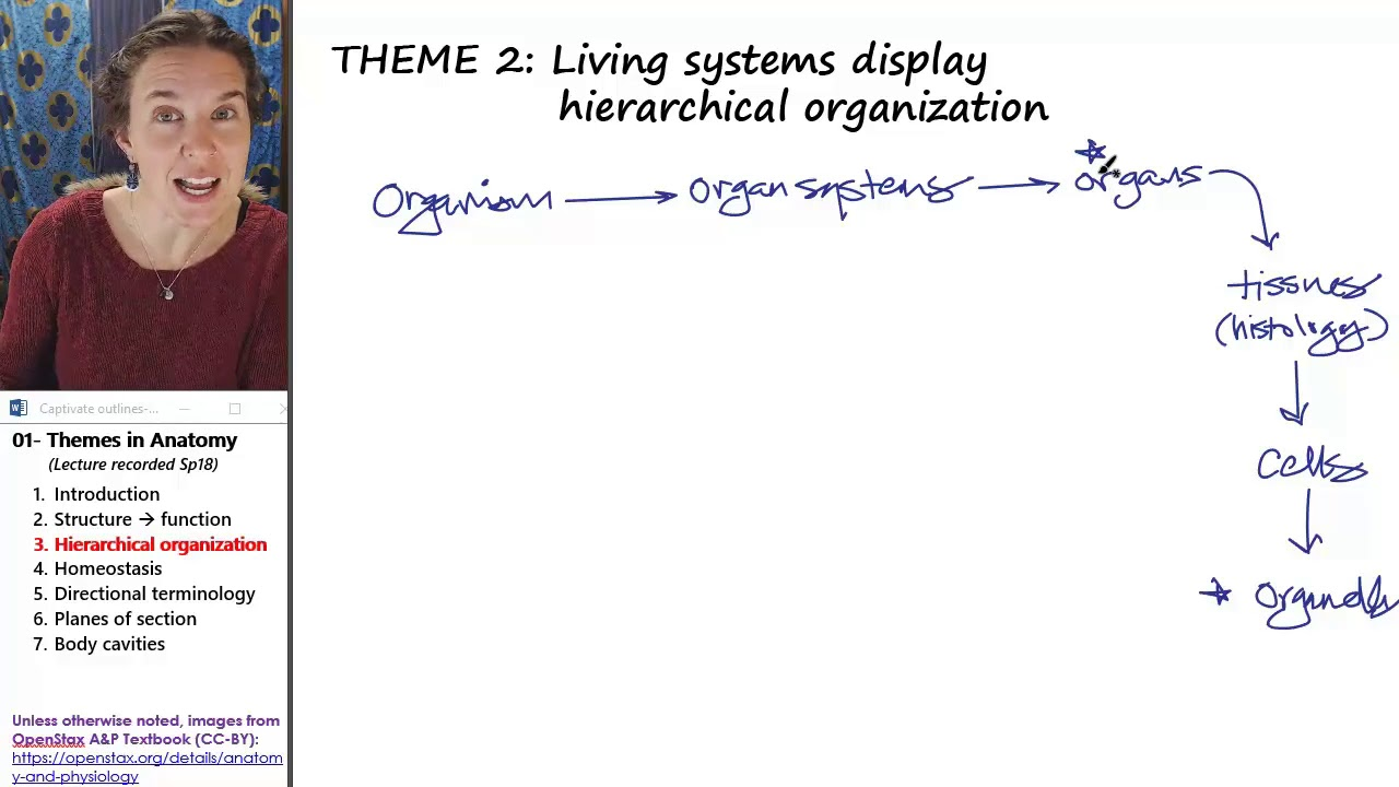 Anatomical Themes 3- Hierarchy - YouTube