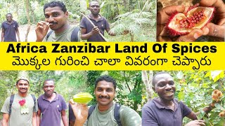 Zanzibar Land Of Spices | Uma Telugu Traveller